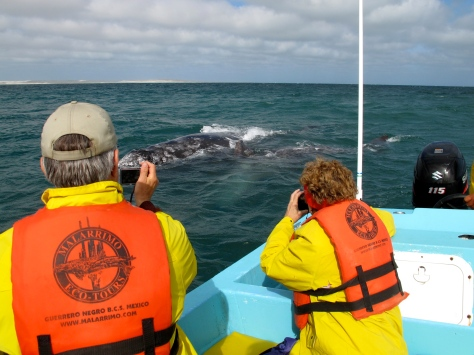 They caught us and hung out in the rear of the boat for a few minutes while we admired them.
