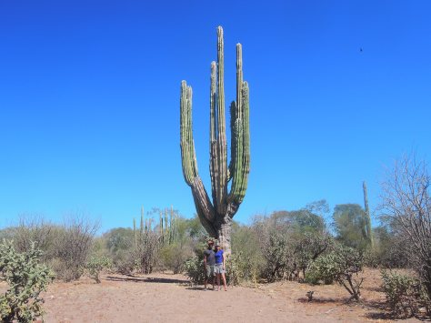 Here we are next to the giant cactus.