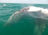 Whale blow hole