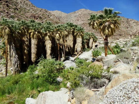 Amazing to see a palm oasis in the middle of the desert.
