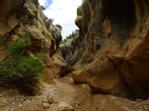 As we followed the creek along the trail the canyon walls began to get a little higher.