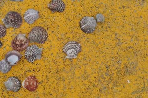 Sea shells, sea shells