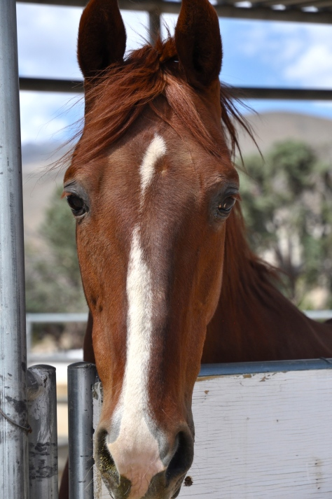 Another beauty on the ranch. She was curious about Darryl's camera until the shutter clicked and the she bolted.
