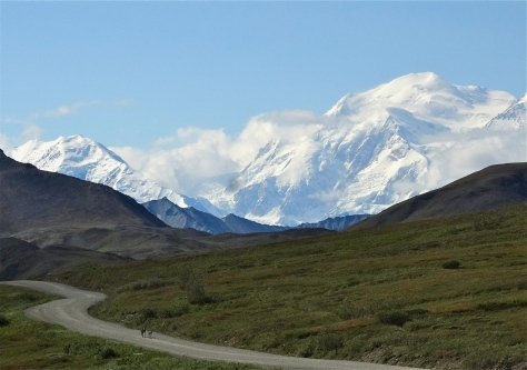 Denali with caribou along the road.